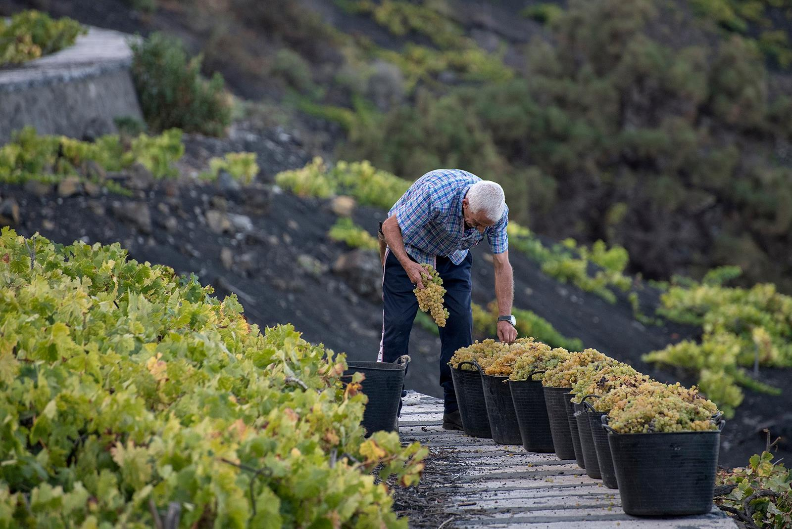 Visit-Bodegas-Teneguia-winery-with-wine-Tasting-2