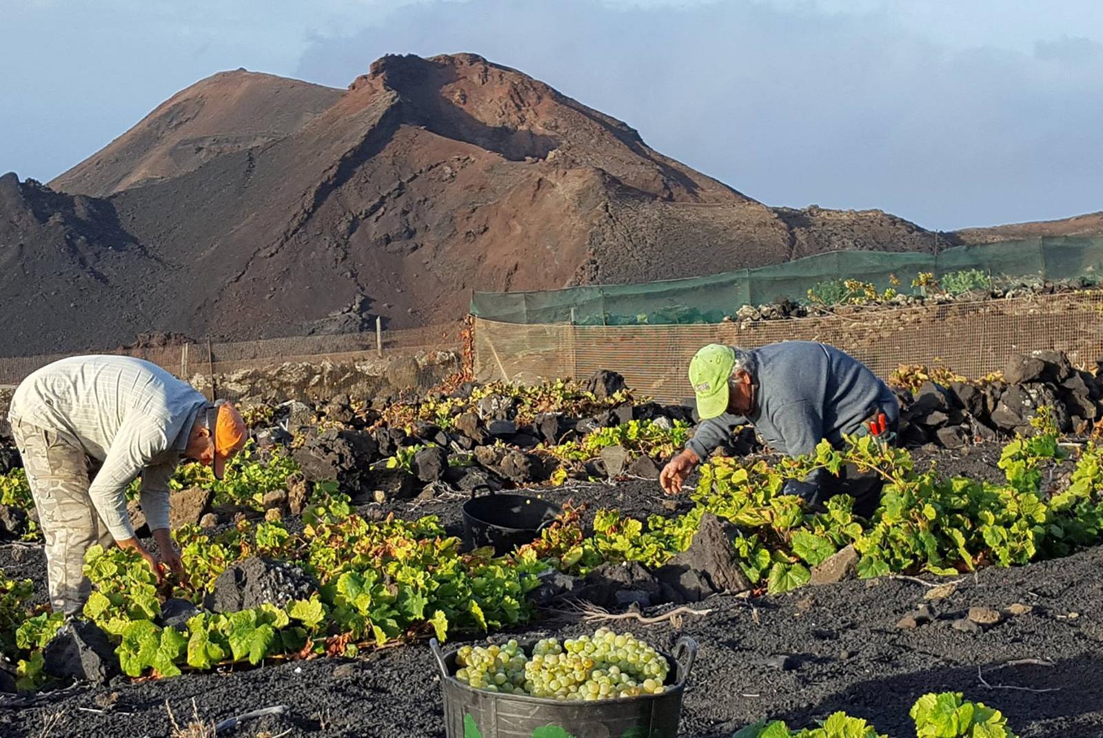 Visit-Bodegas-Teneguia-winery-with-wine-Tasting-3
