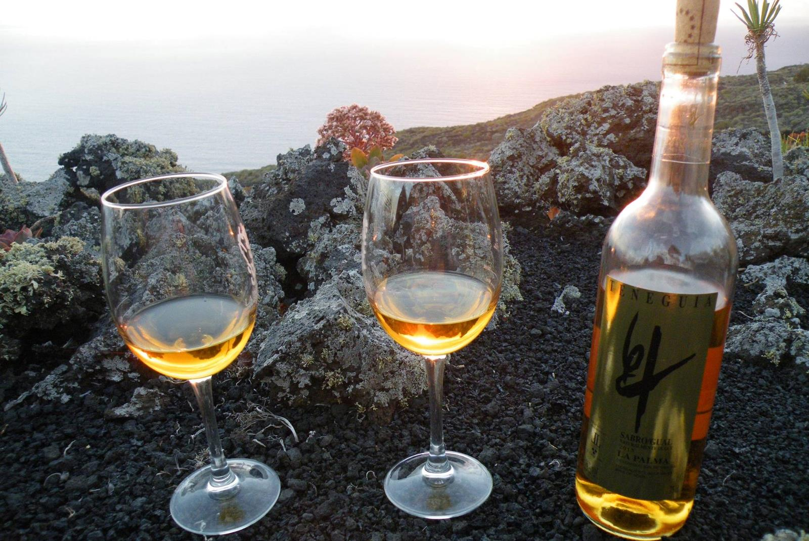 Visit-Bodegas-Teneguia-winery-with-wine-Tasting-4