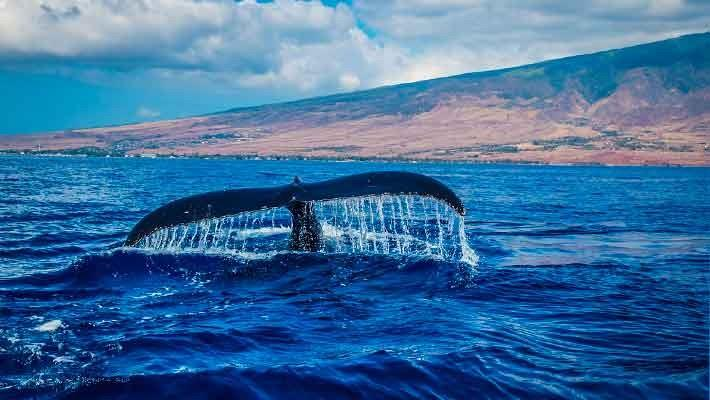 dolphin-watching-gran-canaria-3