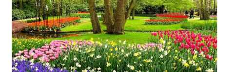 Keukenhof Tulip Gardens Day Trip