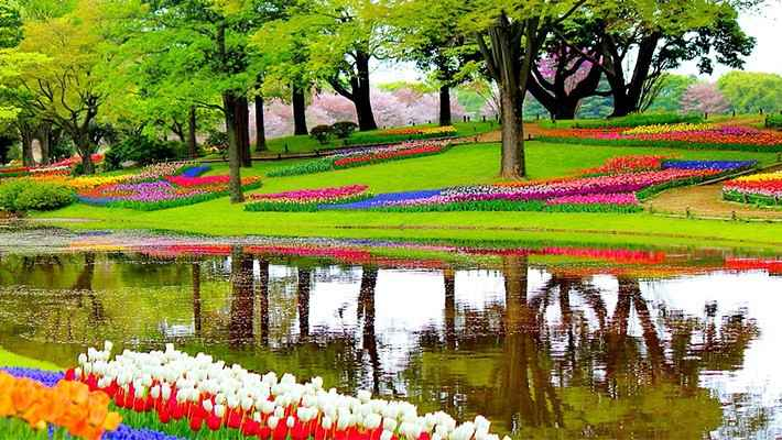 excursion-jardines-de-tulipanes-Keukenhof-3