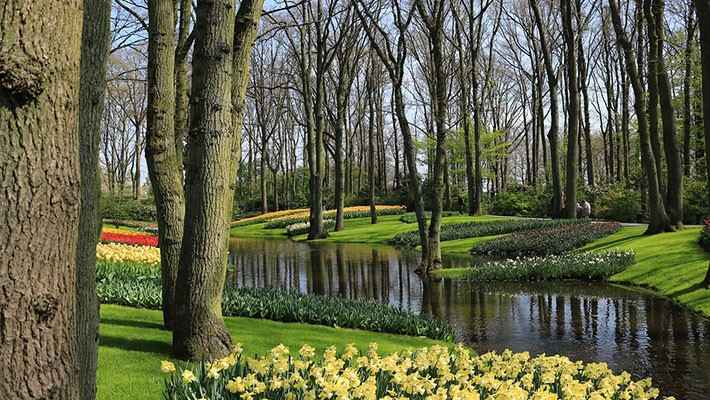 excursion-jardines-de-tulipanes-Keukenhof-4