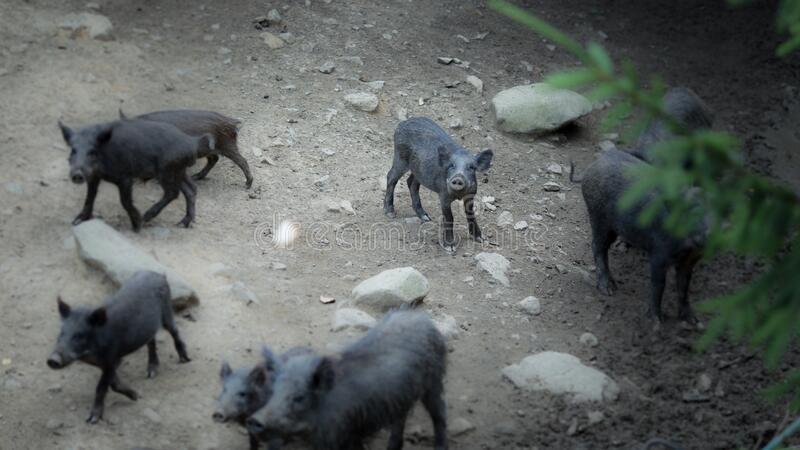 Iberian-Pig-Tour-in-the-Sierra-de-Huelva-1