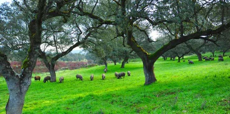 Iberian-Pig-Tour-in-the-Sierra-de-Huelva-3