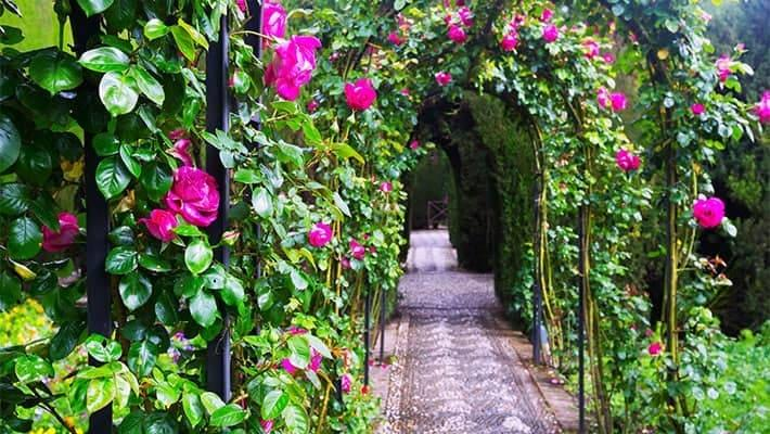alhambra-of-granada-and-generalife-tour-1