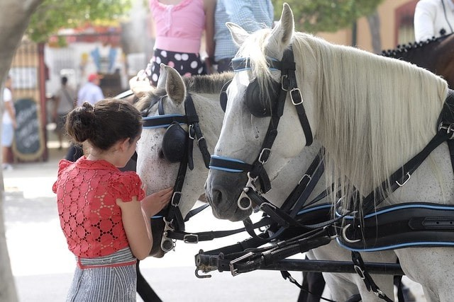 que hacer en la feria de malaga caballo.jpg
