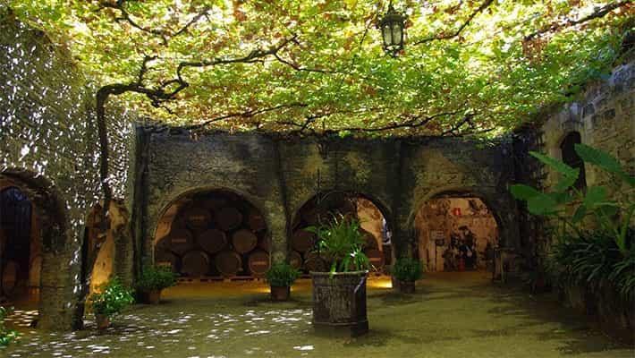 wineries-tio-pepe-tour-2