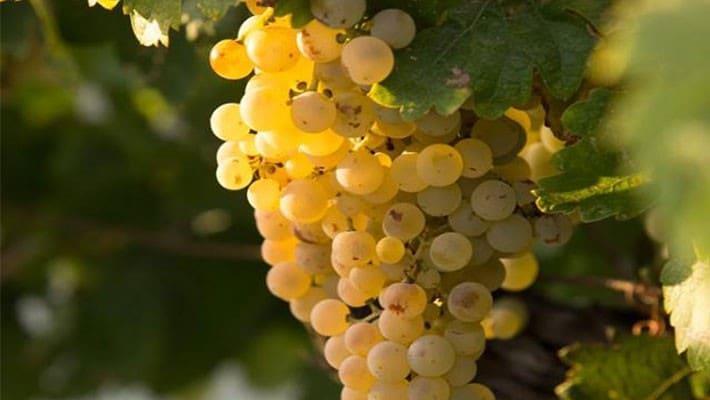 wineries-tio-pepe-tour-3
