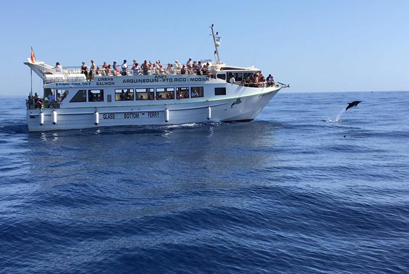 Avistamiento-de-cetaceos-desde-Puerto-Rico-4
