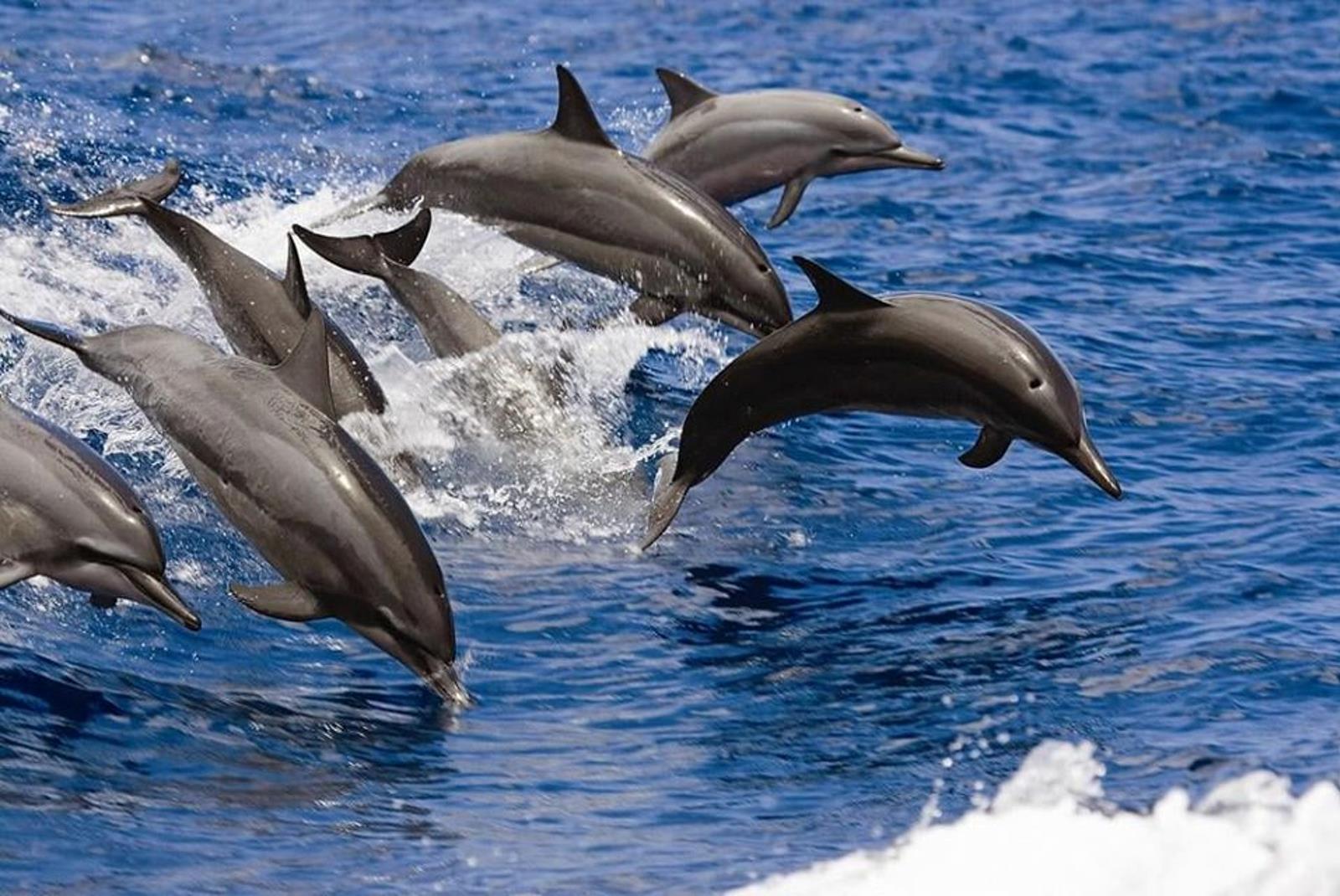 Avistamiento-de-cetaceos-desde-Puerto-Rico-3