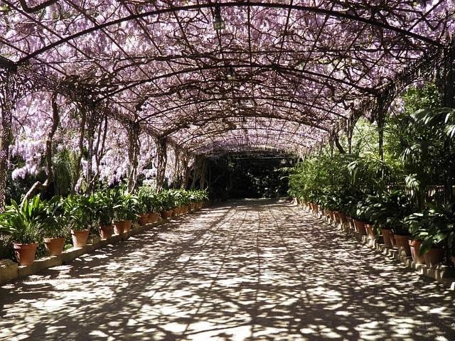 que visitar gratis en malaga ardin botanico.jpg