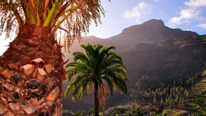 excursion-cumbres-gran-canaria-4