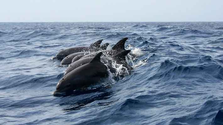 dolphin-watching-gran-canaria-2