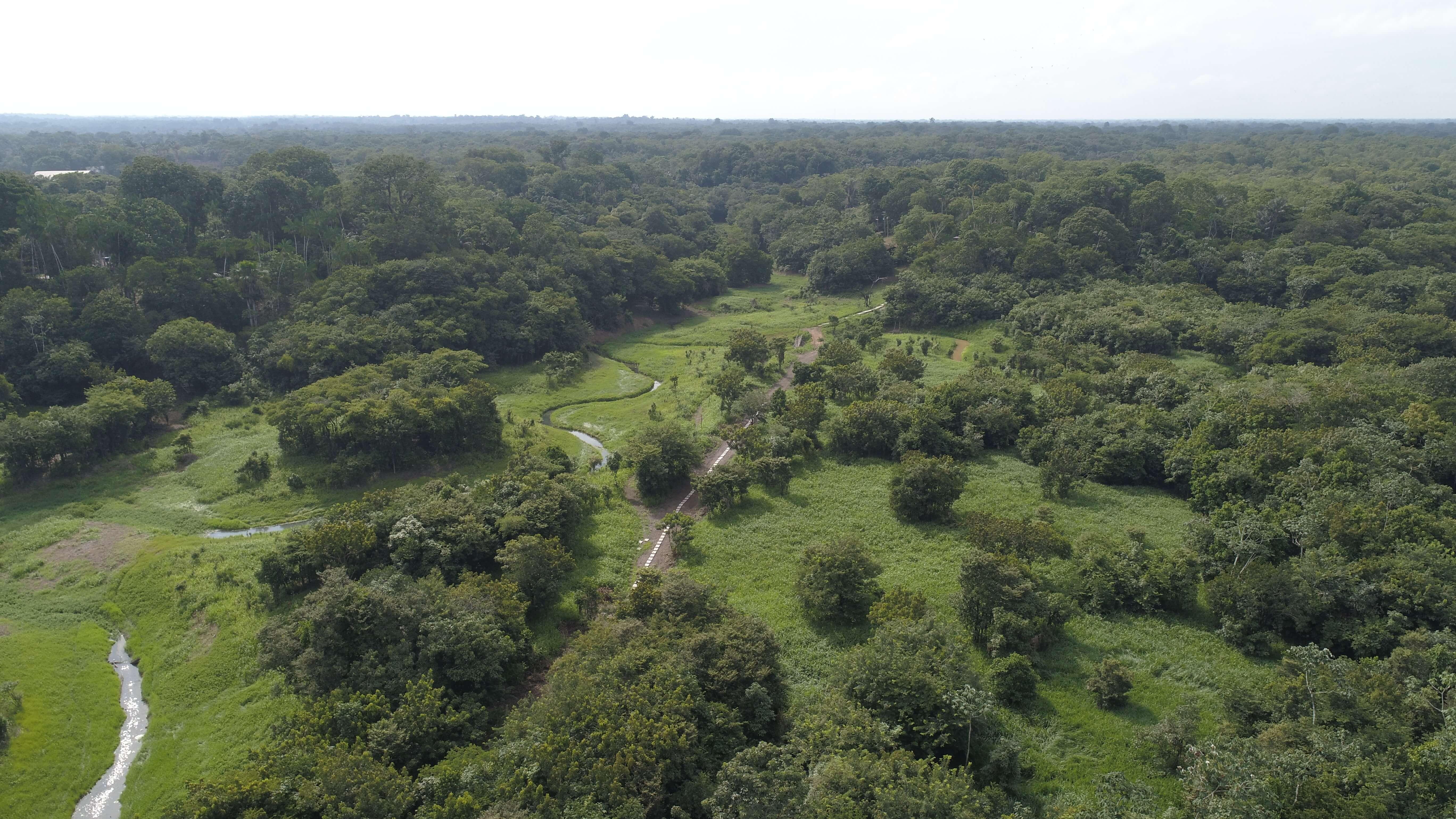 amazonas-rainforest-selva-1687373 (1).jpg