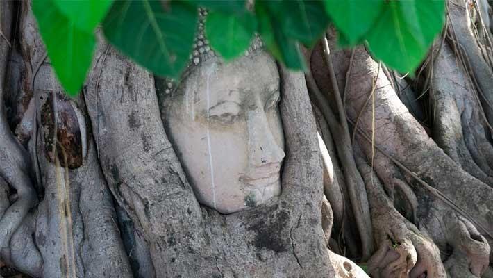 ruins-of-ayutthaya-guided-tour-3