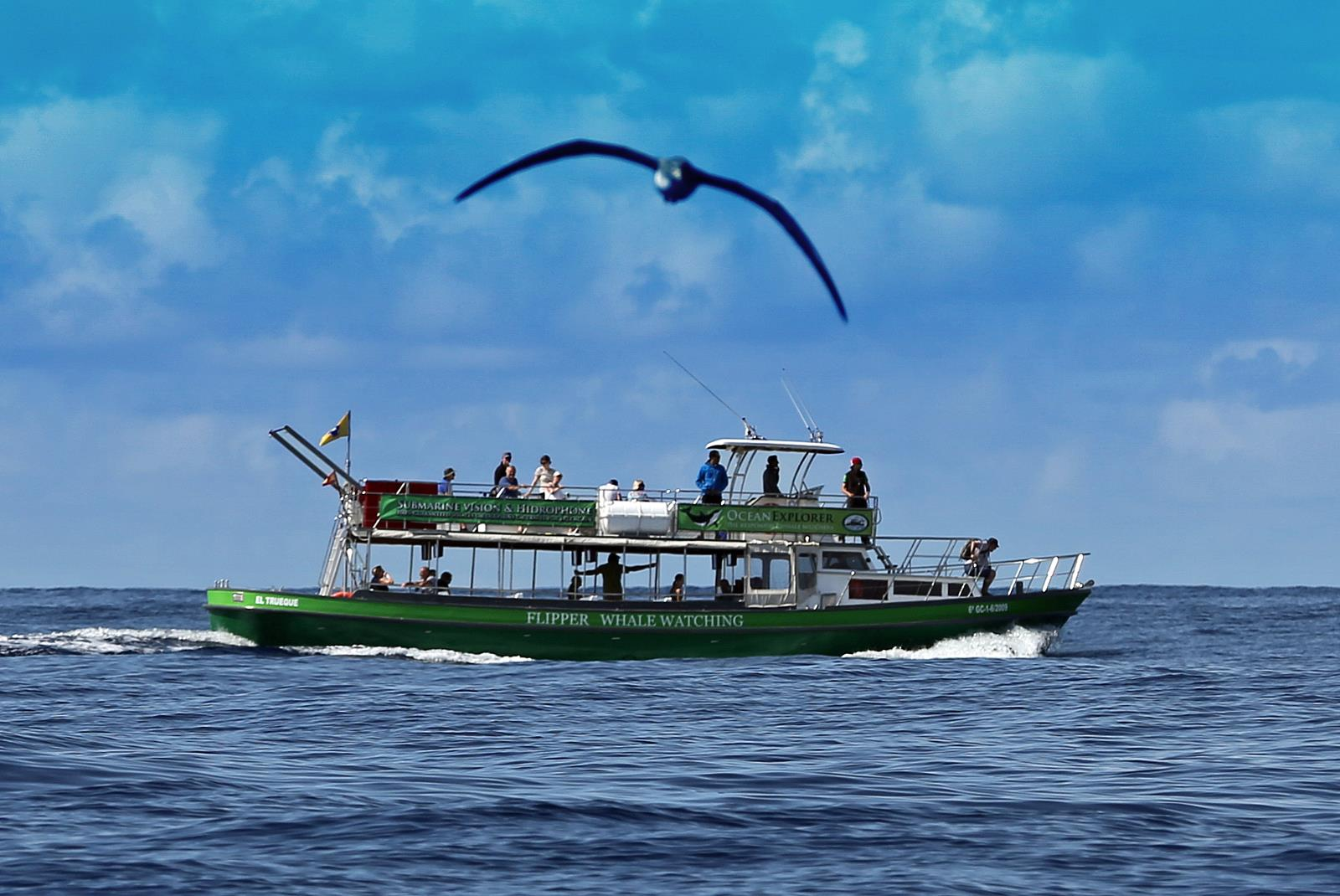 Dolphin-and-Whale-Watching-in-La-Palma-1