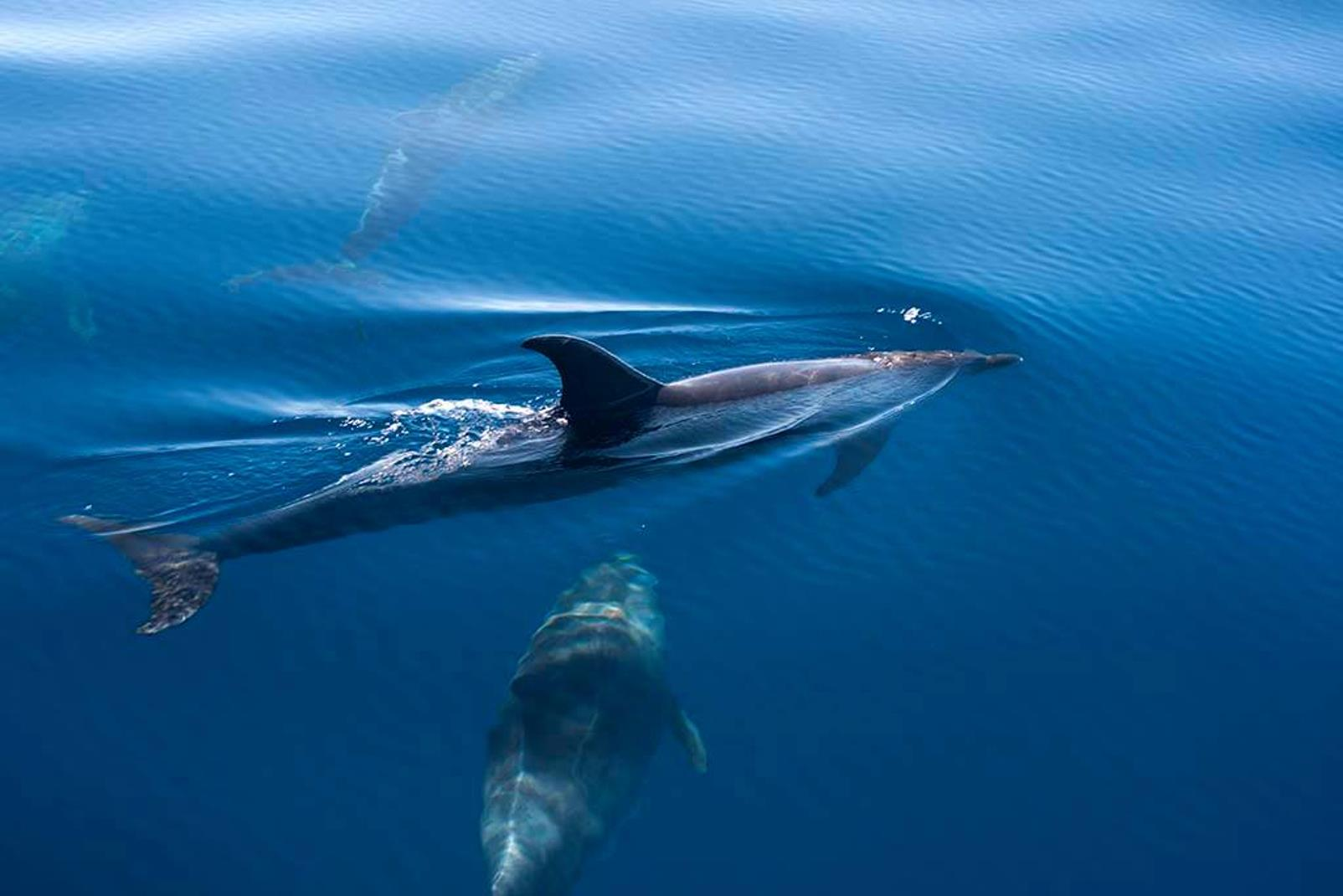 Dolphin-and-Whale-Watching-in-La-Palma-4