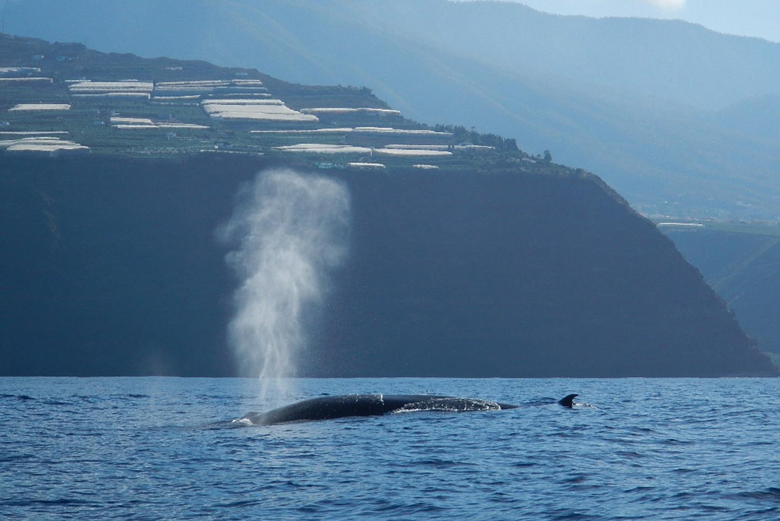 Dolphin-and-Whale-Watching-in-La-Palma-3