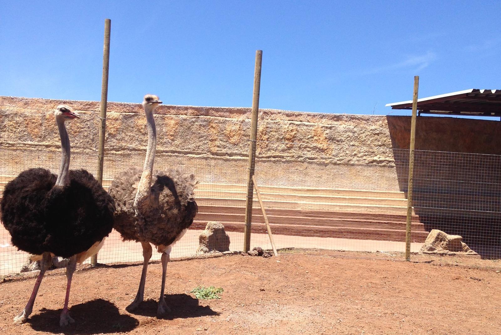 Entrada-al-zoo-Cocodrilo-Park-en-Aguimes-5