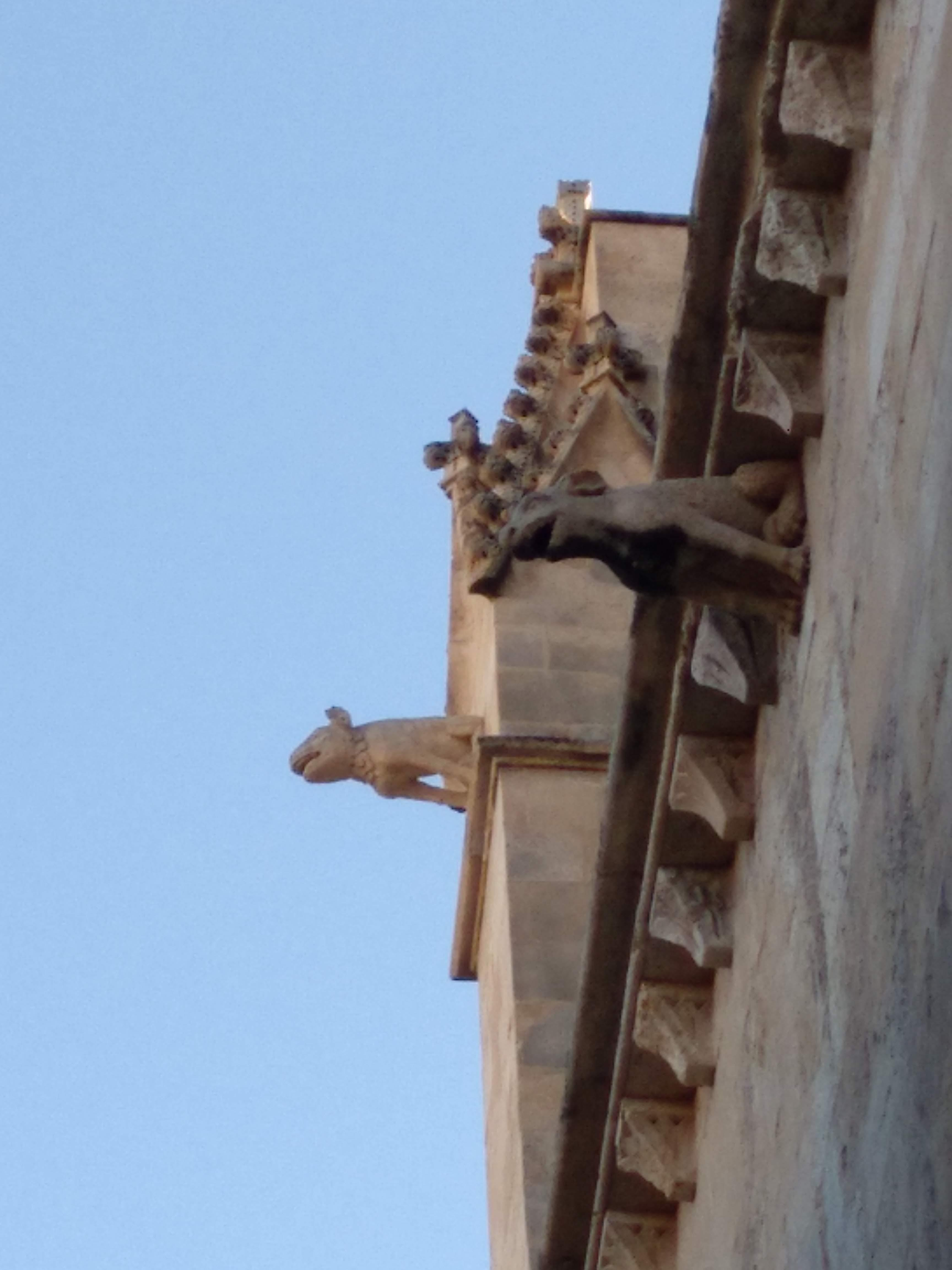 Fantastic-animals-of-Palma-5