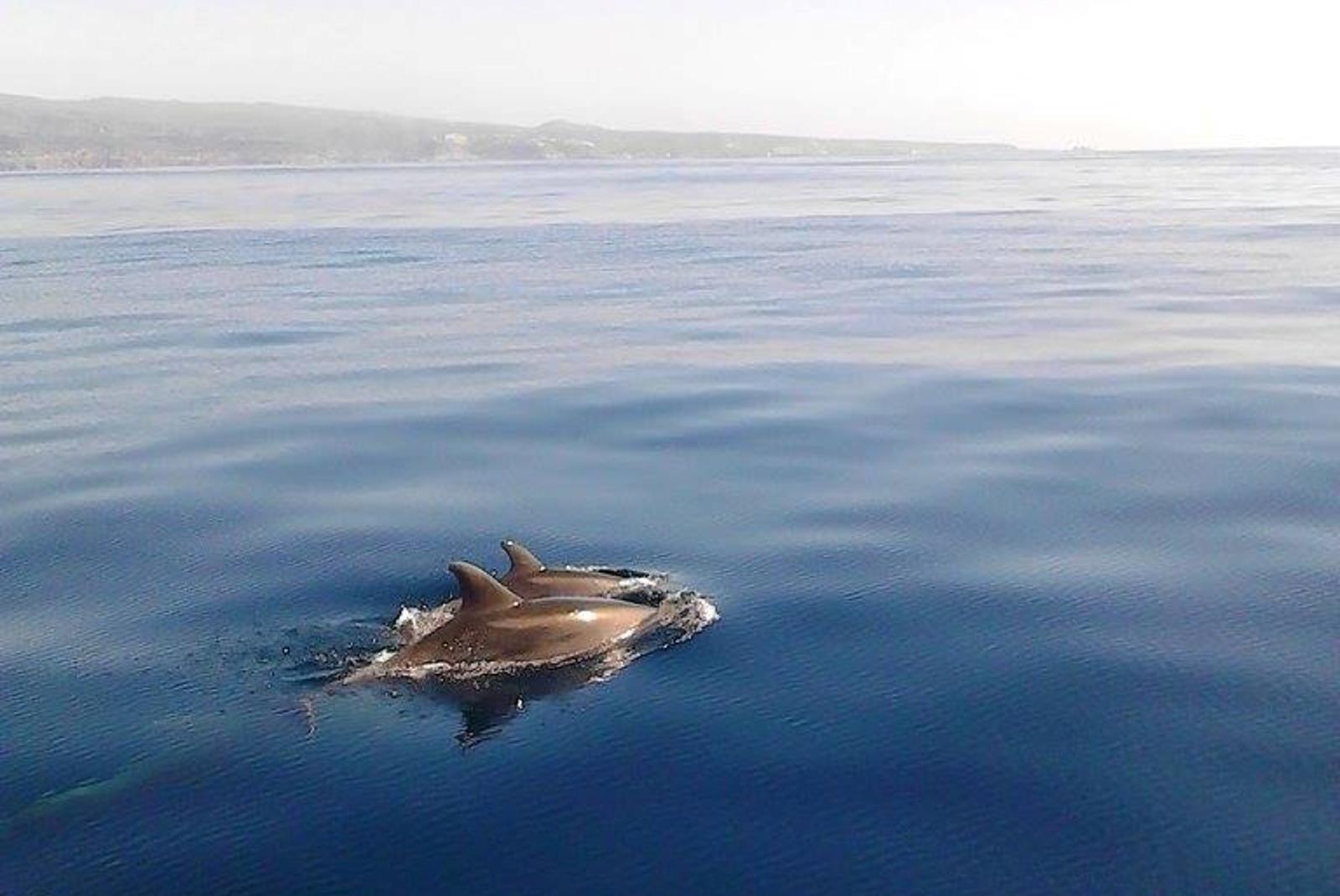 Sailing-Boat-Trip-from-Puerto-de-Mogan-8