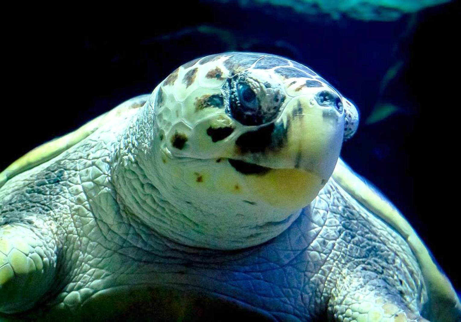 Ticket-to-Aquarium-Lanzarote-in-Costa-Teguise-6