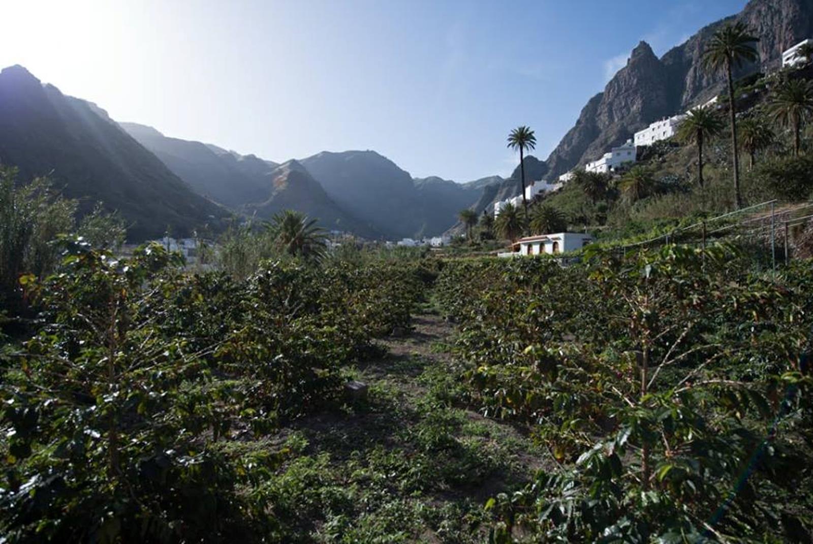 Coffee-Tour-in-Gran-Canaria-1