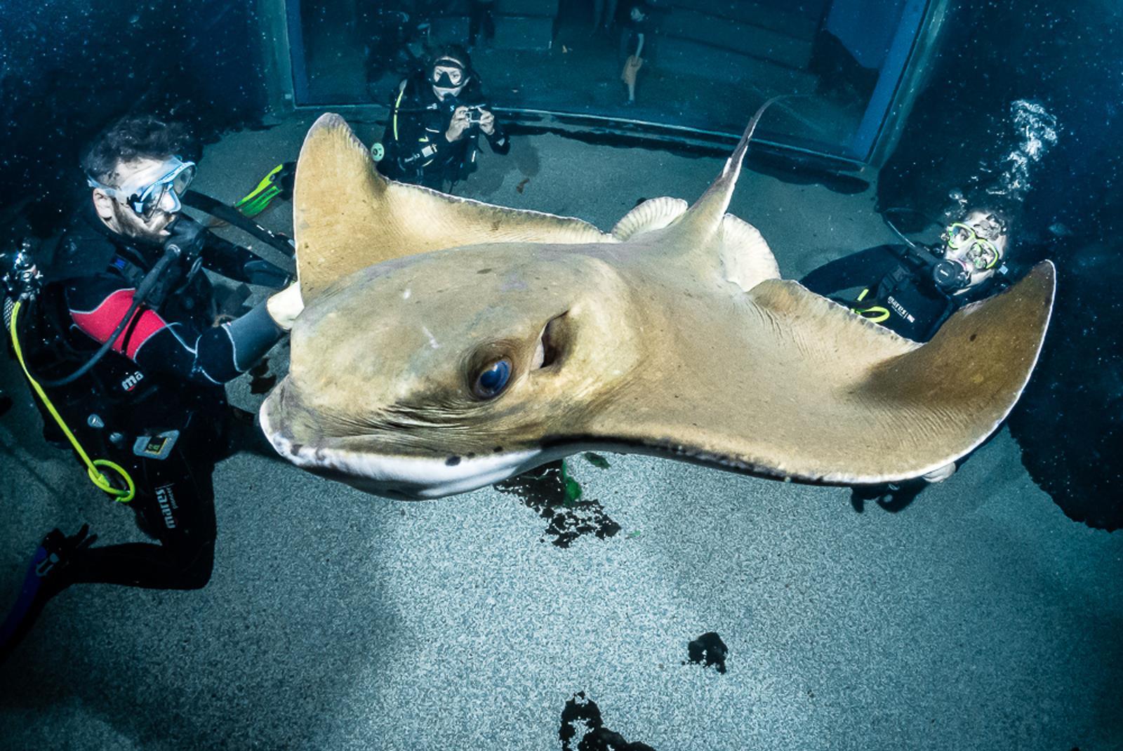 Ticket-to-Aquarium-Lanzarote-in-Costa-Teguise-1