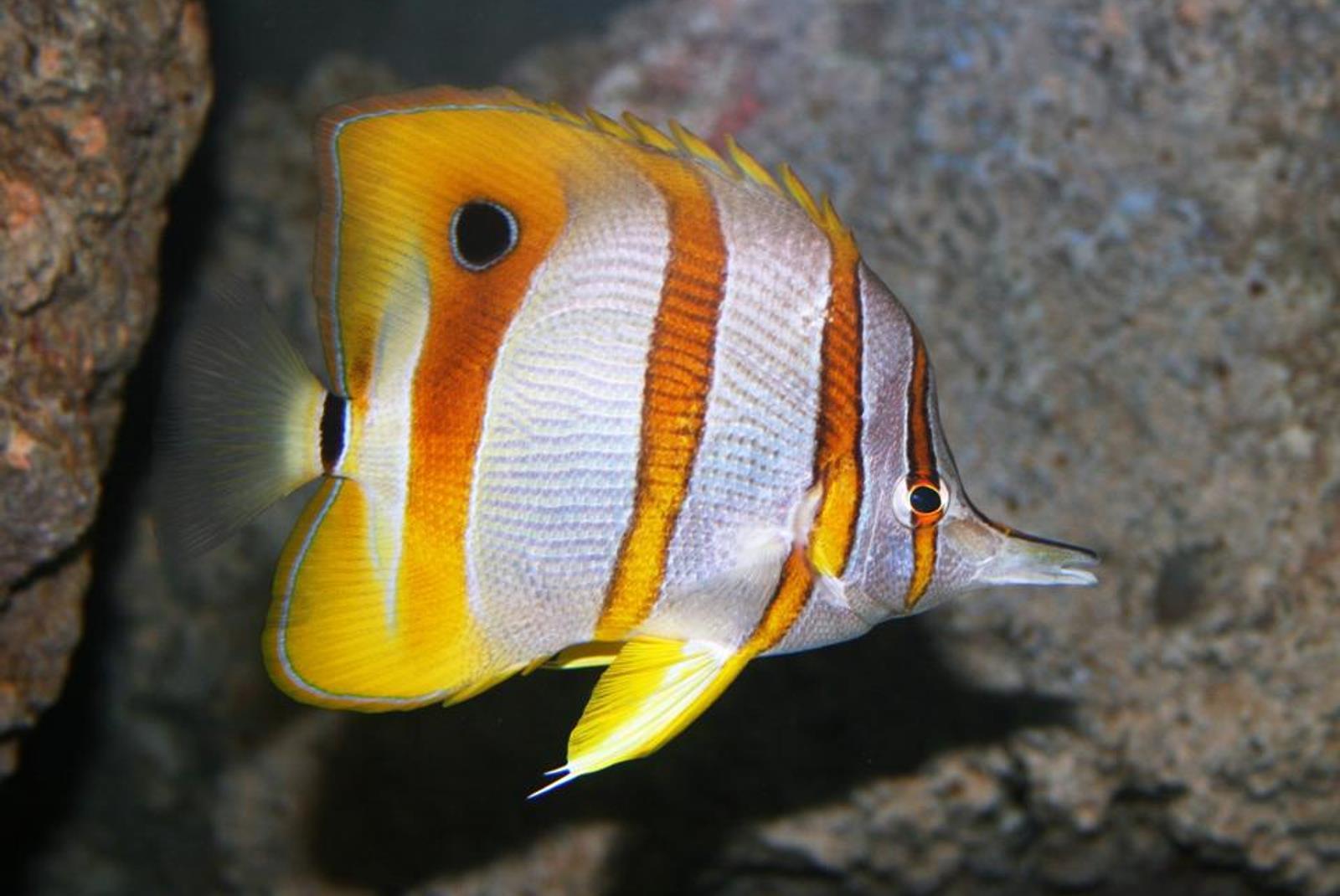 Ticket-to-Aquarium-Lanzarote-in-Costa-Teguise-2