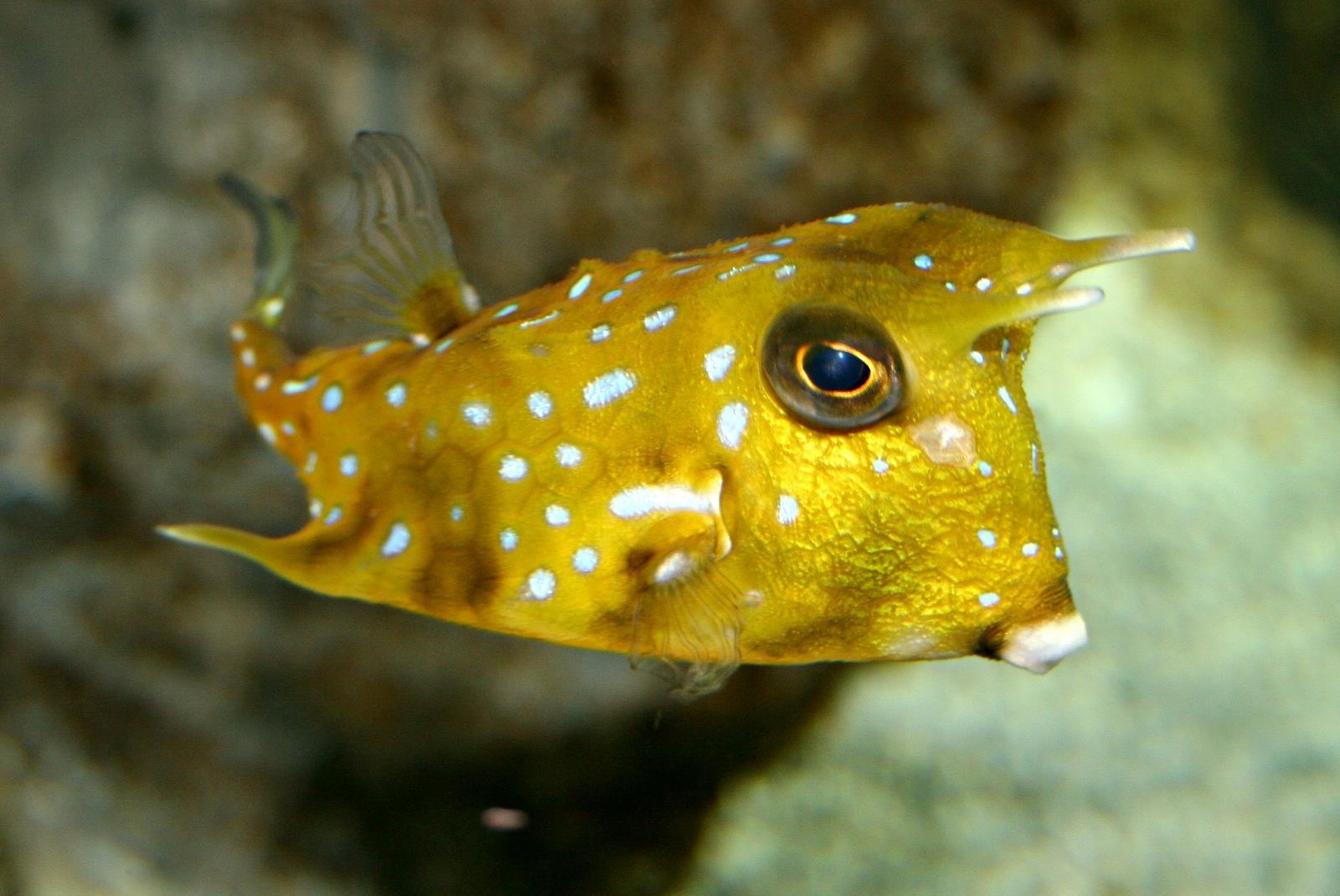 Ticket-to-Aquarium-Lanzarote-in-Costa-Teguise-5