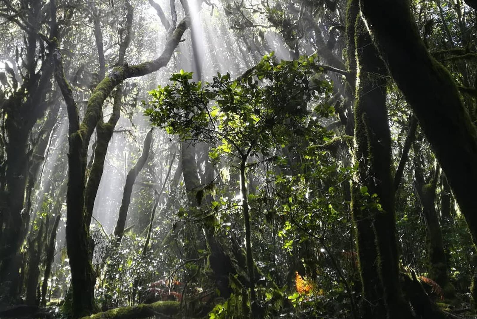 Senderismo-por-el-Parque-Natural-de-Garajonay-7