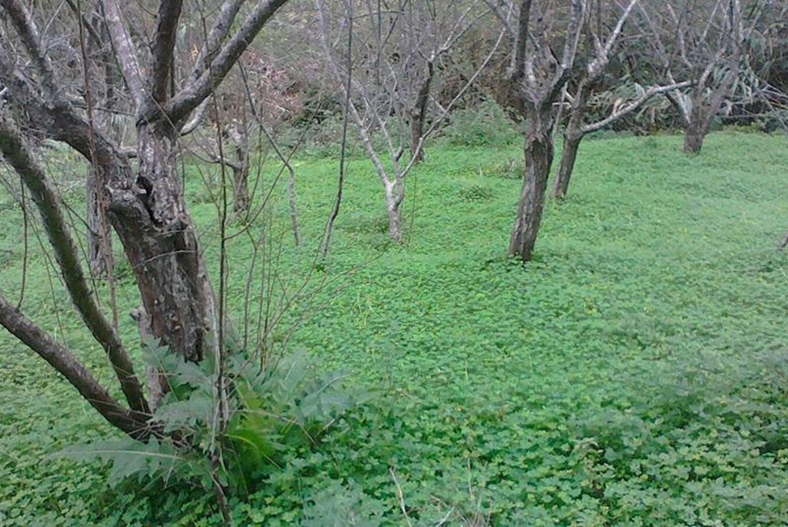 Senderismo-por-el-Parque-Rural-de-Anaga-2