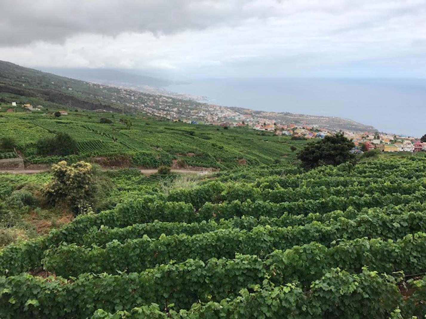 Guachinche-4-hour-Gastronomic-Tour-in-Tenerife-4