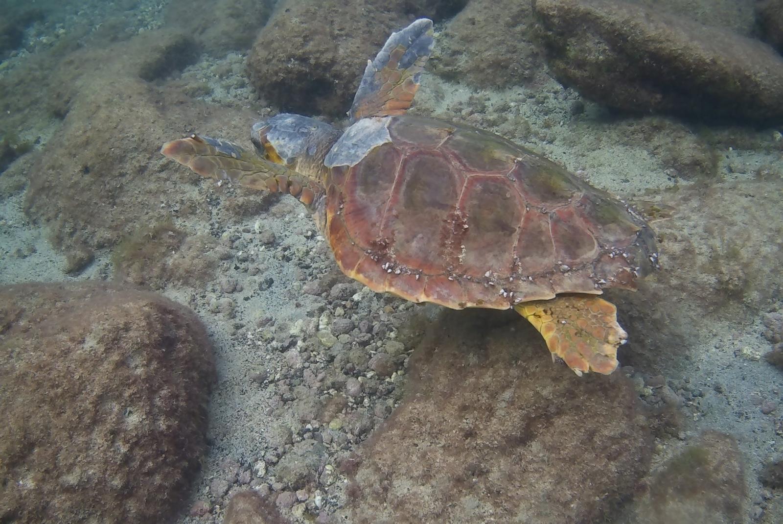 Buceo-con-casco-Sea-Trek-en-Lanzarote-7