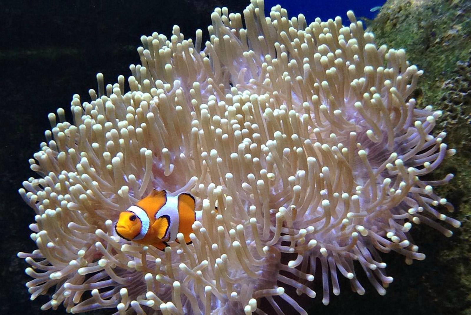 Ticket-to-Aquarium-Lanzarote-in-Costa-Teguise-4