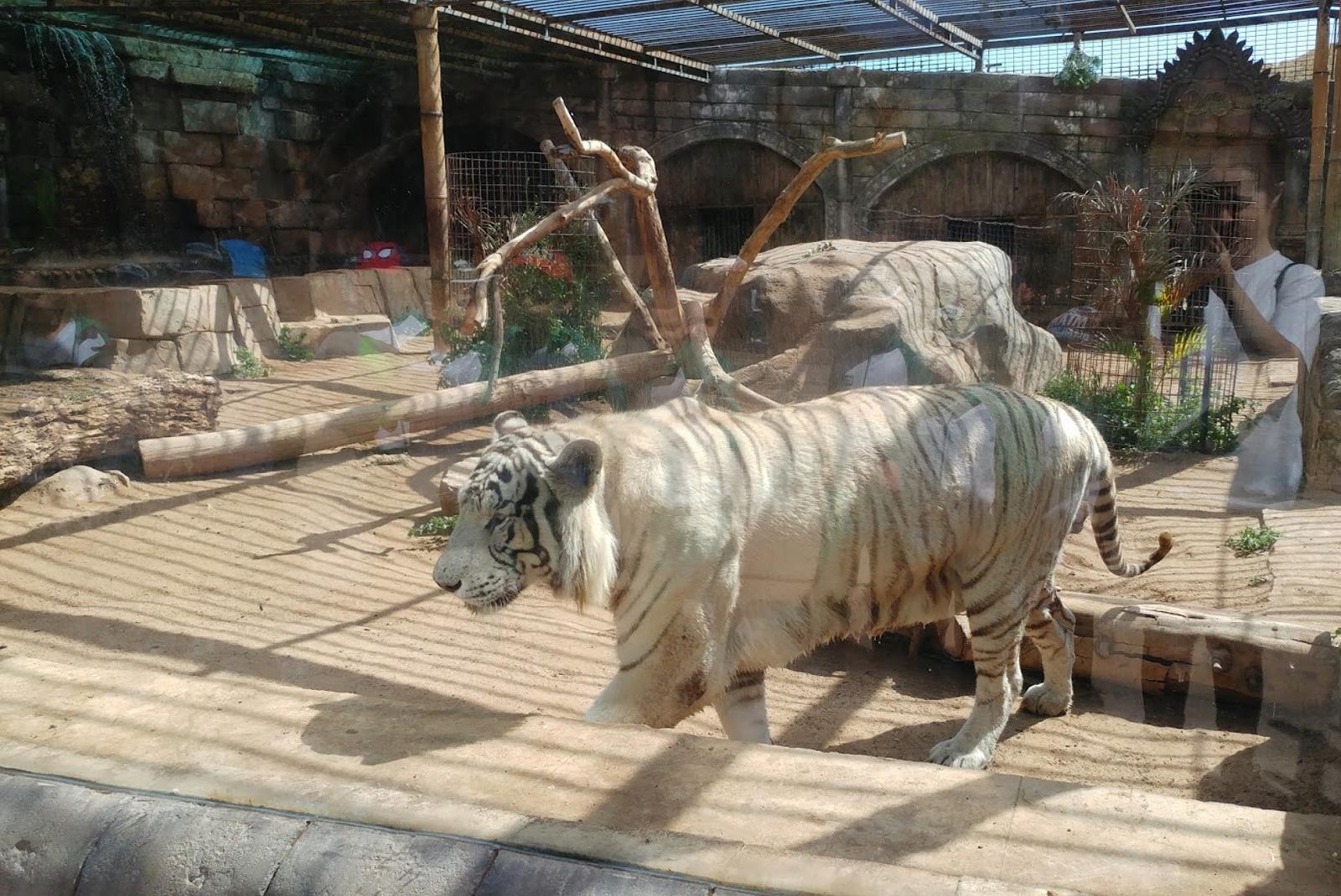 Entrada-al-zoo-Cocodrilo-Park-en-Aguimes-2