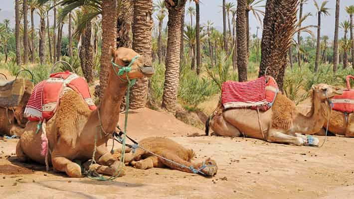 paseo-en-calesa-por-marrakech-2