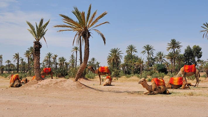 paseo-en-calesa-por-marrakech-3
