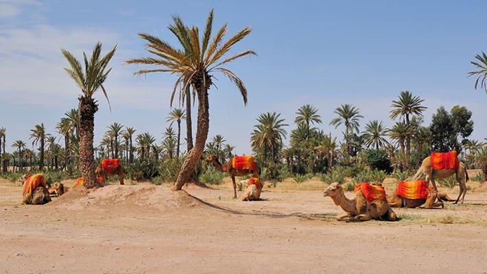 marrakech-buggy-experience-3