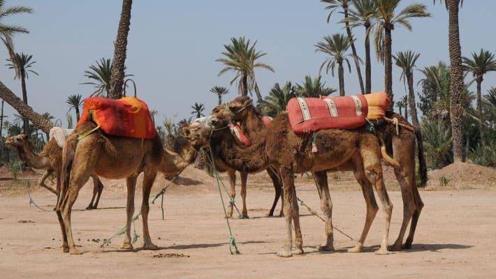 visita-guiada-por-los-jardines-de-marrakech-6