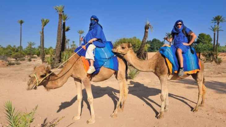 camel-ride-in-the-palm-grove-of-marrakech-2