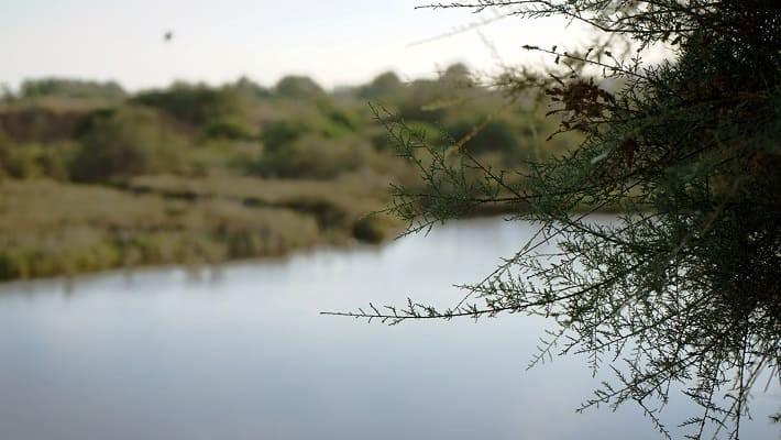 guadalhorce-nature-reserve-hiking-trails-1