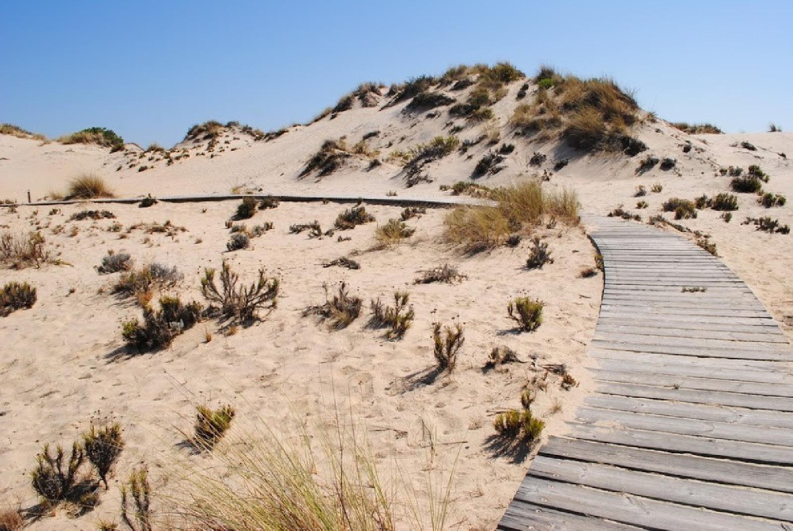 Experiencia Sabor Africano en Doñana